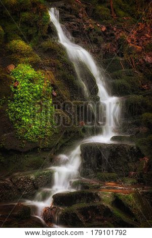 Lush greens, Autumn leaves and waterfalls at Melincourt Brook in Resolven, South Wales