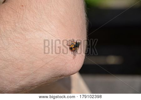 Insects sitting on the skin on an elbow and sucking blood