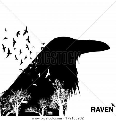 Isolated raven head silhouettes with double exposure effect. Trees with birds as background