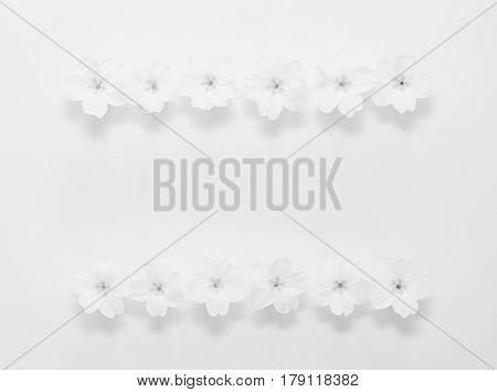 Floral frame from flowers of the primrose on a white background with space for text monochrome photo