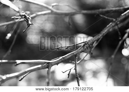 Black and white tree branch with light leak background hd
