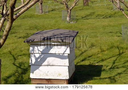 Beehive used for the purpose of production of honey and pollination of nearby fruit trees