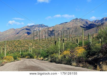 Road through Bear Canyon in Sabino Canyon Recreation Area Park in the Sonoran Desert along the Santa Catalina Mountains in Tucson, Arizona.