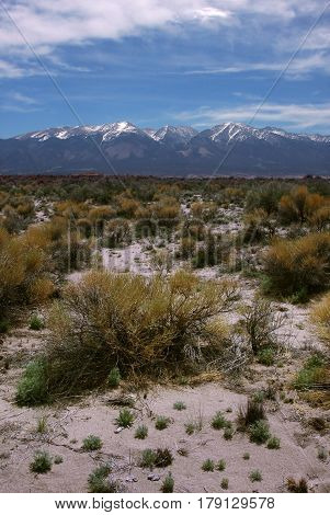 Sage brush and sand in the San Luis Valley near Alamosa, Colorado with Sangre de Cristo mountains in the background