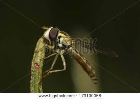 Fly sitting on green grass bushes in a meadow close-up
