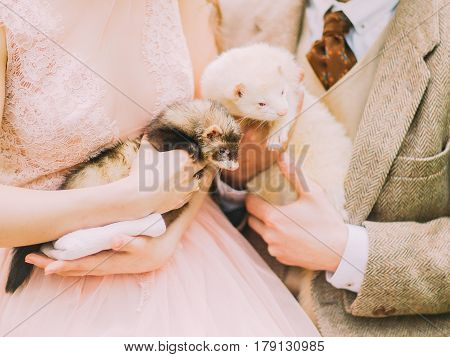 The vertical close-up photo of the brown and white ferrets held by the newlyweds hands