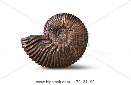 Ammonite - fossil mollusk which lived in the ancient sea 180 million years ago.