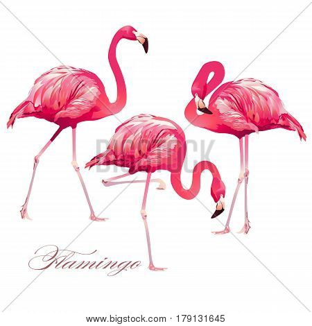 Tropical Bird pink Flamingos. Vector fauna illustration.