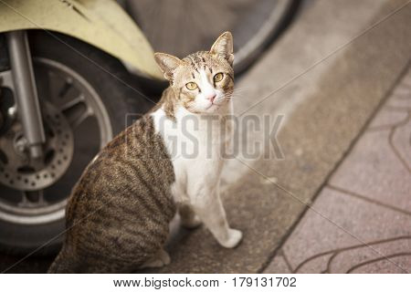 Lonely cat on the street looking at Camera thailand