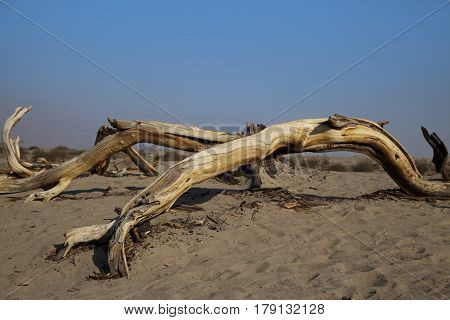 A dead tree in the Death Valley Desert