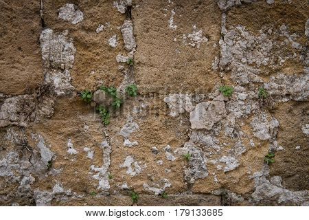 Stoned yellow stained wall with green plants