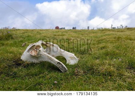bone remnants lying in open air on the grass