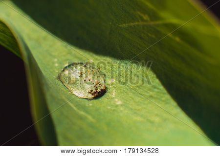Morning dew on green leaf close up screensaver