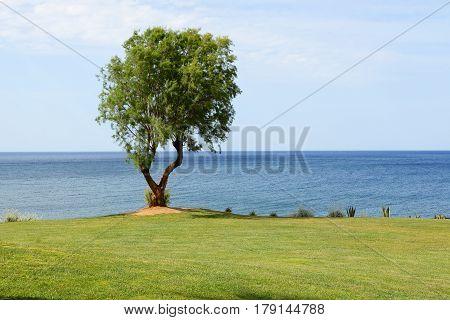 The tree near beach at luxury hotel Crete Greece