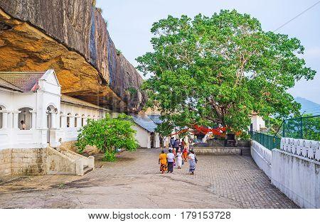 The Bodhi Tree Of Dambulla