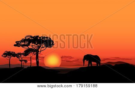 African Landscape With Animal Elefant Silhouette. Savanna Wildlife Nature. Sunset Skyline Background