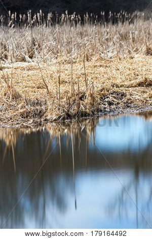 Reeds on the edge of a marsh reflecting in smooth glassy water sunlit scene