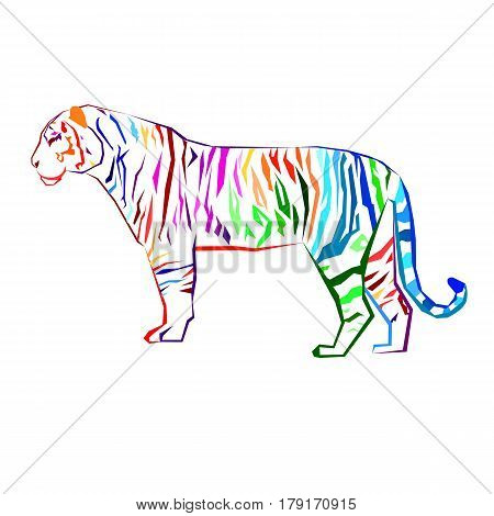 tiger vector wild illustration strength mammal wildlife graphic carnivore wildcat