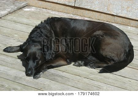 dog black deck sleeping lazy  snooze face