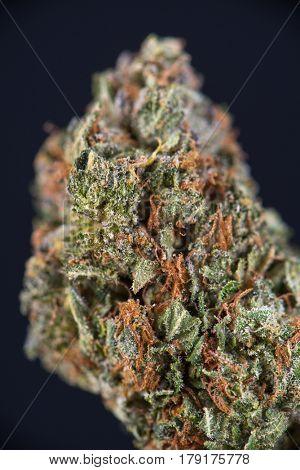 Macro detail of cannabis bud