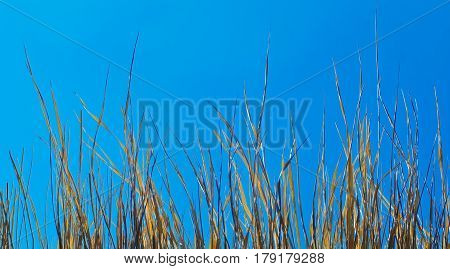 Hay Against Sky