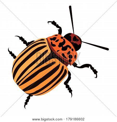 illustration nature potato colorado vector animal beetle