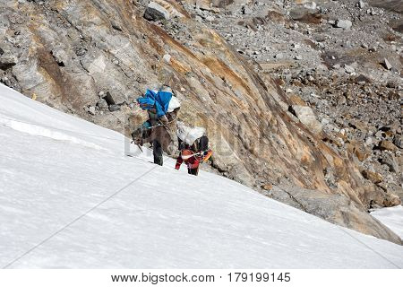 Nepalese professional Mountain Porters carrying heavy Luggage of high Altitude Expedition moving on steep and dangerous Ice Wall poster