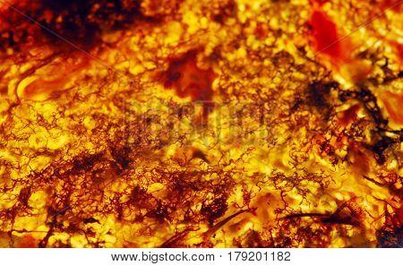 Semi-precious Stones. Amber