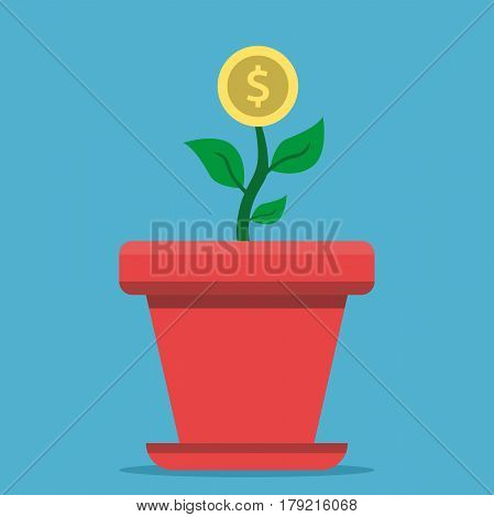 Money Plant In Pot