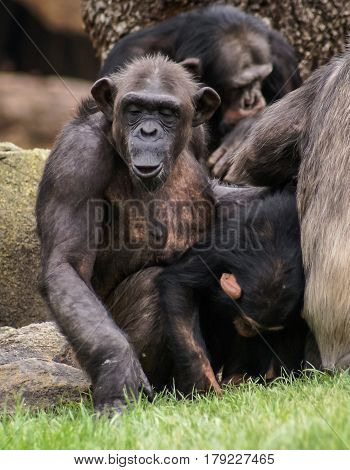 Closeup image of a crowded group of monkeys