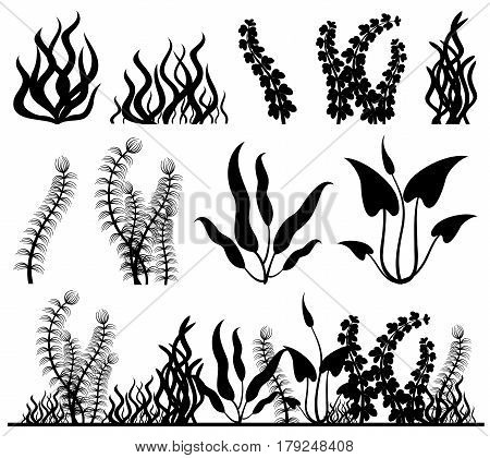 Sea plants and aquarium seaweed vector set. Nature seaweed black silhouette illustration