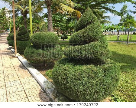 beautifully manicured conifers, trees, shrubs, patterned, tapered cone, fluffy, there are palm trees, a bright Sunny photo from vacation on the sea, Vietnam