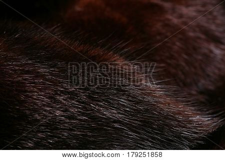Dark Fur