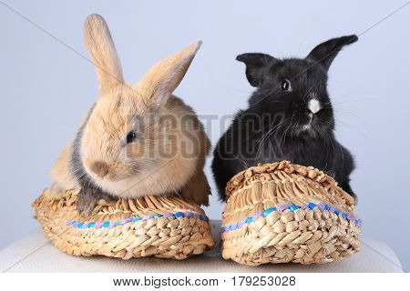 Two Rabbits In Bast Shoes