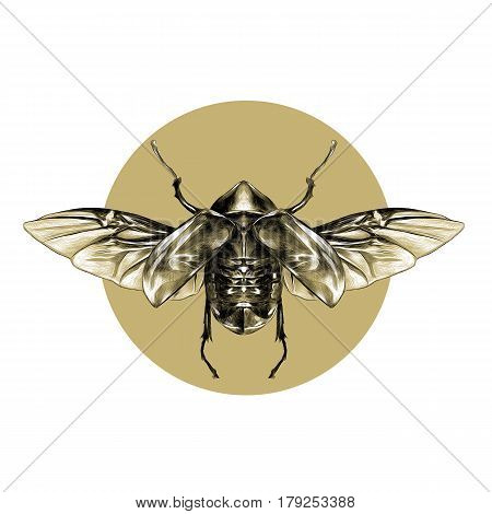 beetle with open wings top view symmetric flies sketch vector graphic background brown circle