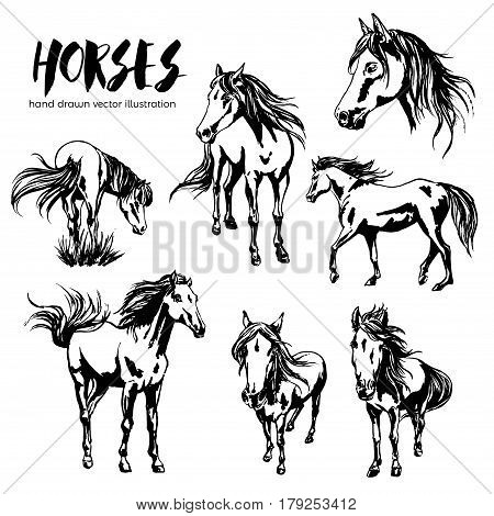Collection of seven beautiful hand-painted horses portraits, vector illustration, equestrian design, racehorses.