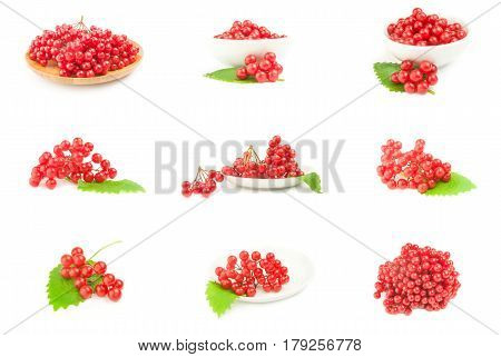 Set of branches of viburnum on a background