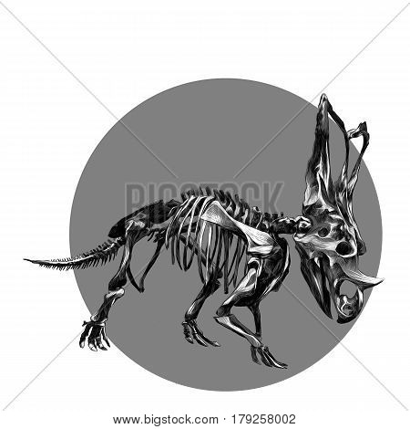 the skeleton of the dinosaur Triceratops black and white pattern on the grey circle sketch vector