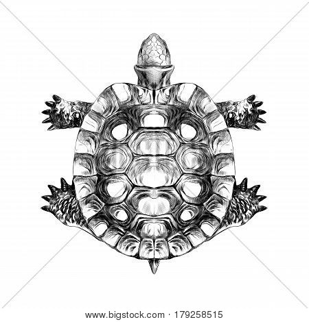 turtle top carapace crawling sketch vector black and white drawing