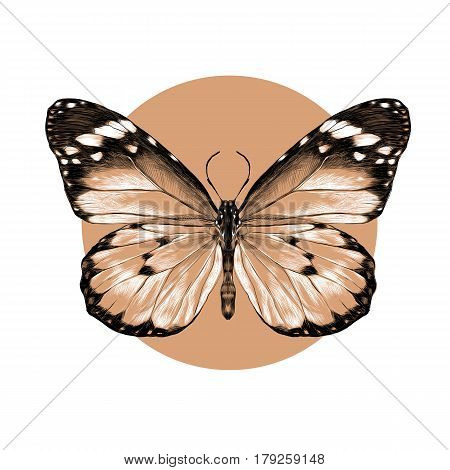butterfly with open wings top view the symmetrical drawing graphics sketch vector black and white pattern on a beige background circle