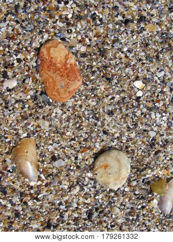Sea sand with rocks and morses of clams
