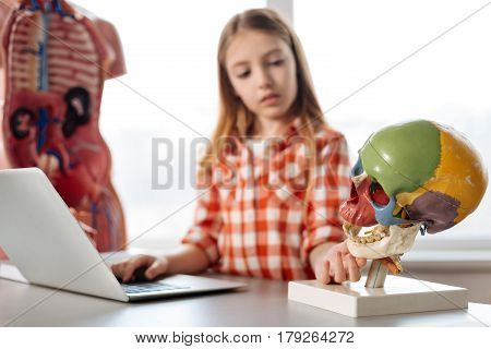 Finding differences. Curious admirable inspiring girl comparing pictures found in internet with a plastic model of a skull while working on her biology assignment