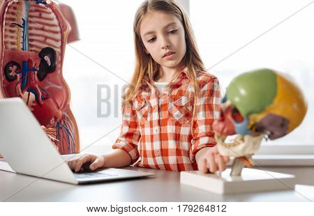 Thoughtful study. Admirable dedicated lively girl examining a plastic skull model in class while comparing it to one she found in internet using her laptop