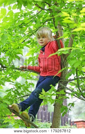 natural countryside lifestyle - caucasian blonde little girl climbing the tree