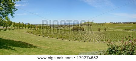 Vines in spring at a vineyard in the north Yarra Valley Victoria Australia.