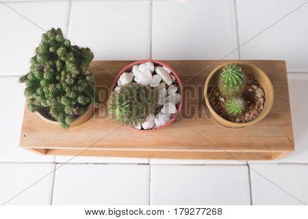 Set cactus succulent plants in pot. Interior gardening decor