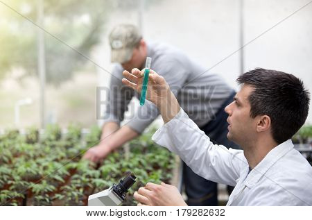 Scientist With Test Tube Microscope And Seedlings