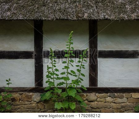 Flowers Against The Adobe Wall Of The Farmhouse