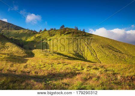 Savanna grassland near Mount Bromo volcanoes in Bromo Tengger Semeru National Park East Java Indonesia
