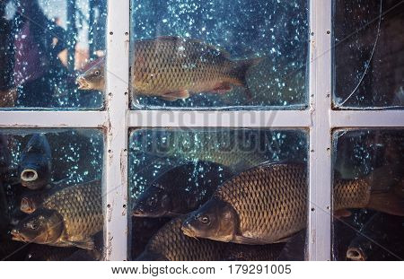 Fresh Fish In Containers